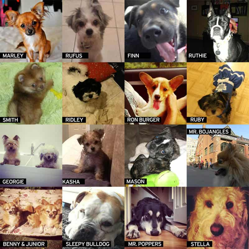 purina-dog-collage