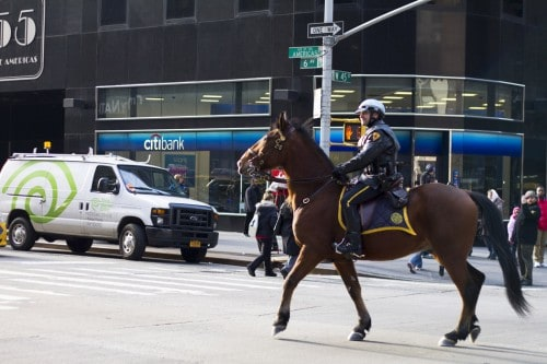 horsecop 500x333 Beautiful Things Happen When Youre By Yourself: Sarah Taylors New York Photo Essay