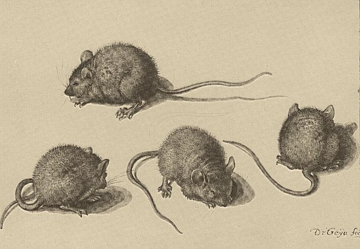 Stop Being Nice, Mice