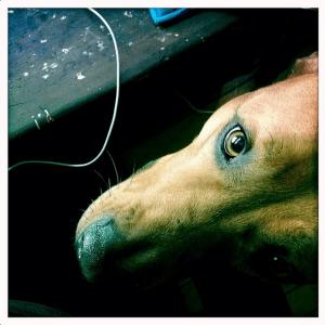 mama-please-feed-us-dinner face #winstagram#sweetpotato #dogloveispurelove
