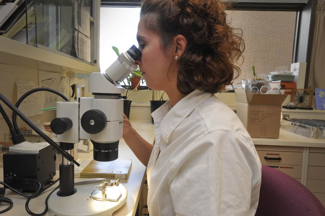 Her Career: Antonia Guidotti - Entomology Technician