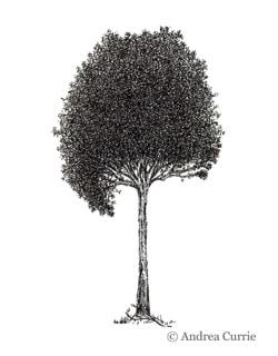 PomonaLIFE tree