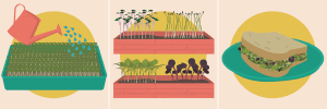 Grow Your Own Microgreens - An Illustrated Guide
