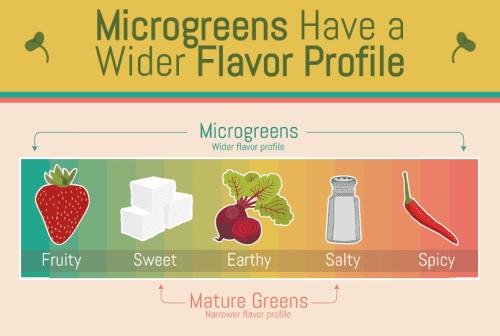 microgreens-flavor-profile