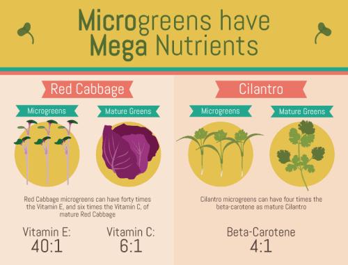 microgreens-have-mega-nutrients
