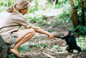 In the Shadow of Woman: The Decade-Long Journey to Meet My Hero Jane Goodall