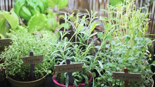 How To Diy The Cutest Indoor Herb Garden With Lee Valley