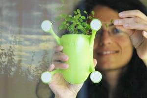 Livit Up! Plants For Your Place