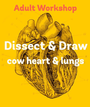 3 Reasons Why Dissect & Draw is Going To Blow Your Mind this Summer