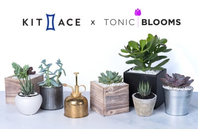 Pop-up DIY Succulent Bar from Tonic Blooms + Kit and Ace