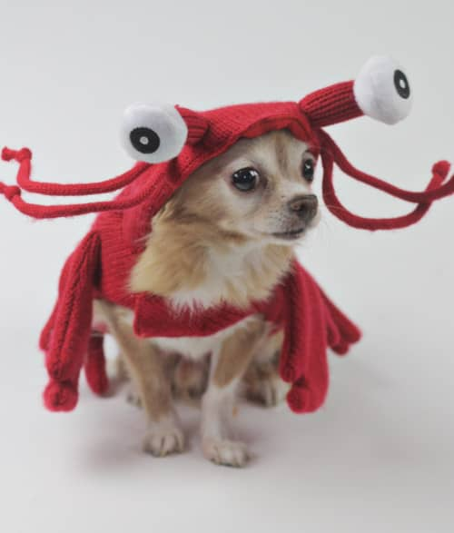 junior_lobster