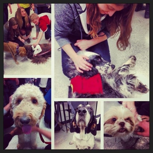 Stressed? Ryerson's Got Therapy Dogs For That